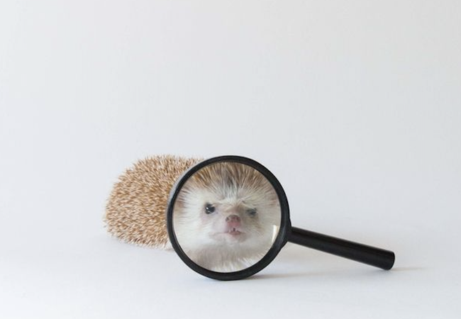 Mole Patrol!