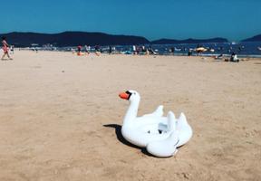 Swan Sunburn